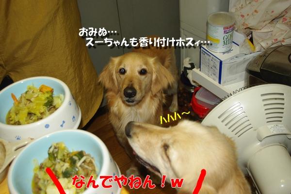 IMGP9914_20110401002458.jpg