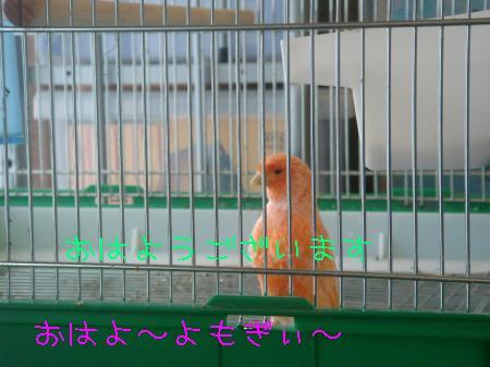 DSC03136_convert_20091117180730.jpg