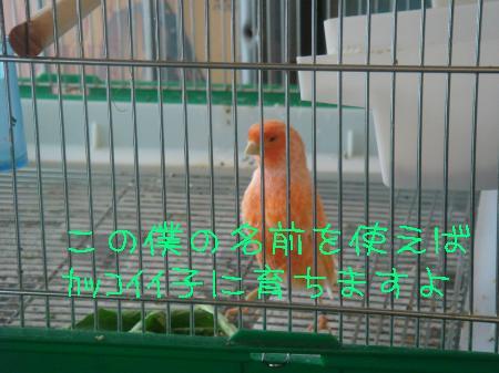 DSC03137_convert_20091213201105.jpg
