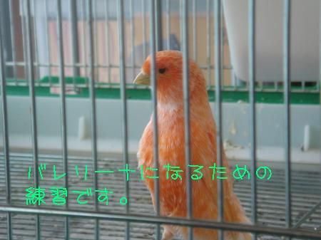DSC03139_convert_20091117181055.jpg