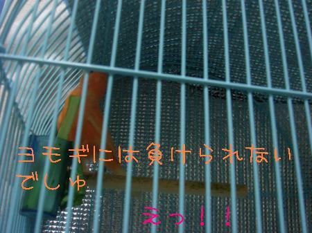 DSC03153_convert_20091118200213.jpg
