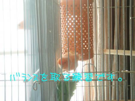 DSC03172_convert_20091201154538.jpg