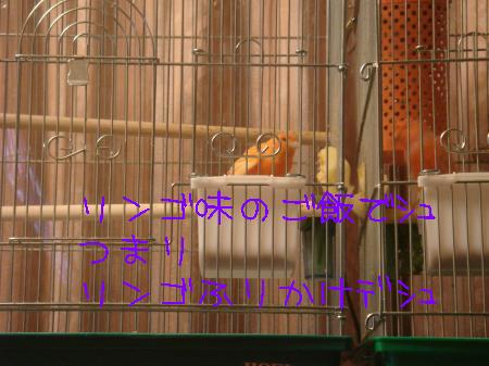 DSC03185_convert_20100115152937.jpg