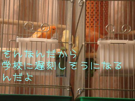DSC03193_convert_20091203183156.jpg