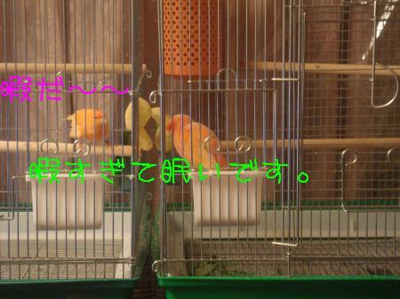 DSC03196_convert_20091225160247.jpg