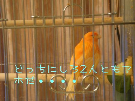DSC03203_convert_20091216190605.jpg