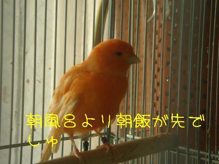 DSC03239_convert_20091227082437.jpg
