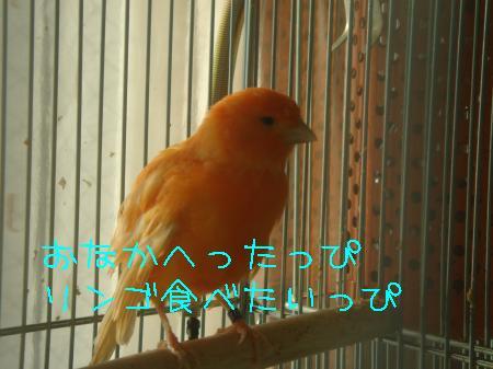 DSC03239_convert_20091231082740.jpg
