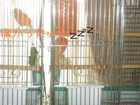 DSC03246_convert_20091229095440.jpg