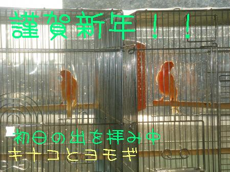 DSC03247_convert_20100101172620.jpg