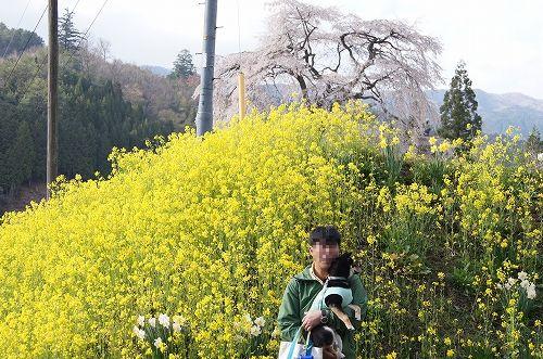 11.04.23 与一野しだれ桜 002