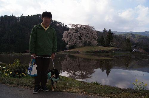 11.04.23 与一野しだれ桜 006
