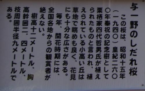 11.04.23 与一野しだれ桜 012
