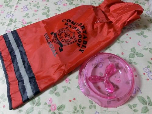11.05.06 ショコラ2才 004