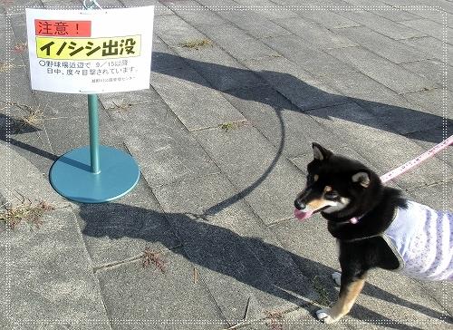 11.09.25 瀬野川公園 008
