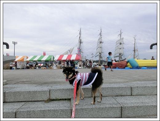 11.10.15 帆船まつり 海王丸 001