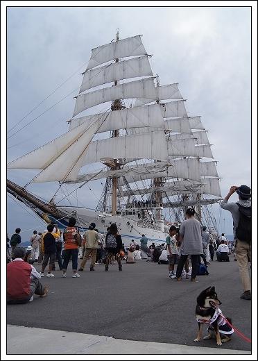 11.10.15 帆船まつり 海王丸 007