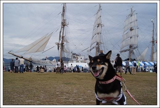11.10.15 帆船まつり 海王丸 005