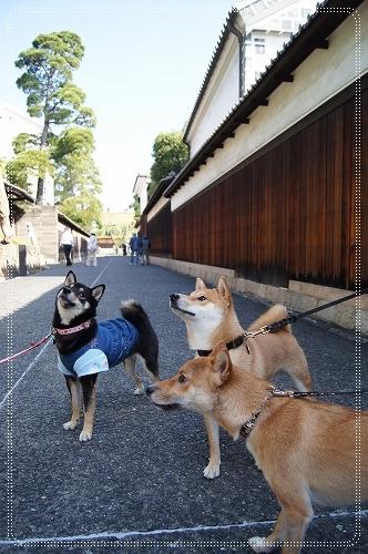 11.10.16 倉敷美観地区 03