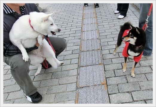 11.11.03 尾道ベッチャー祭り 06