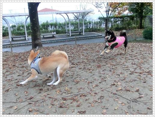 11.11.06 竜王公園 025