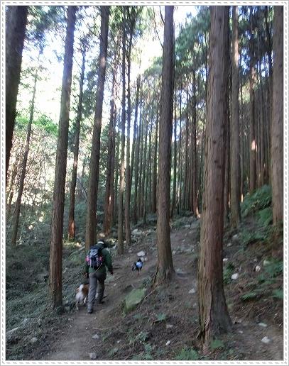 11.11.26 野呂山登山 017