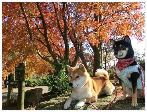 11.11.26 野呂山登山 072
