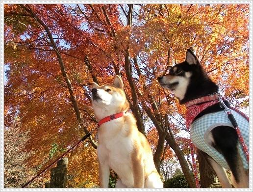 11.11.26 野呂山登山 070