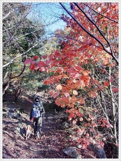 11.11.26 野呂山登山 108