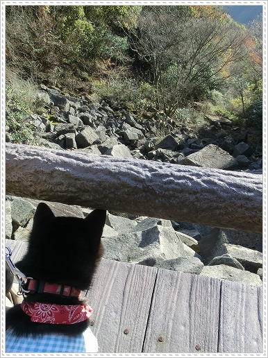 11.11.26 野呂山登山 118