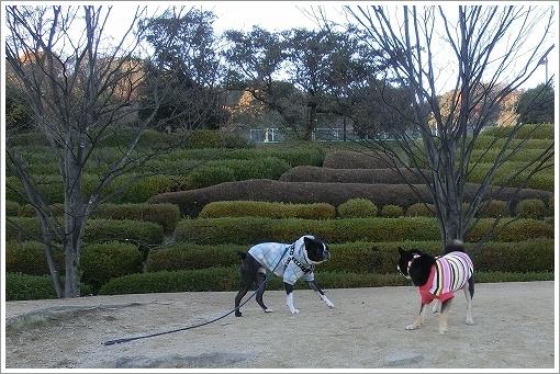 11.12.17 竜王公園ドッグラン 007
