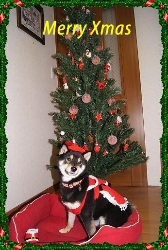 11.12.23 クリスマス 020