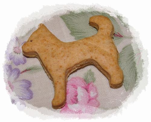 12.02.23 柴犬クッキー 003