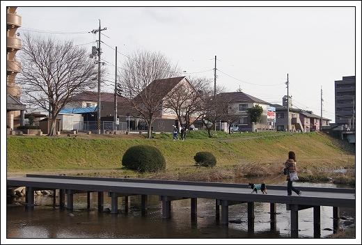 12.03.20 梅の花とドッグカフェPAW 060