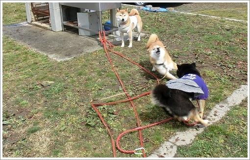 12.03.26 せら香遊ランド キャンプ 030