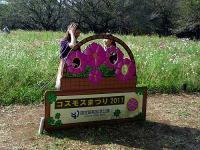 コスモスまつり2011