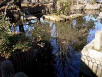 浮島稲荷神社片葉の葦