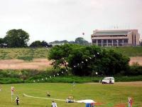 全国凧あげ大会での連凧
