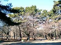 自由広場の樹木