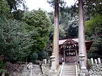 梅園神社拝殿前の巨木