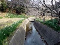 江月水仙ロード
