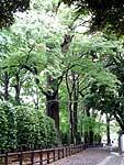天然記念物の境内林