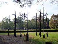「よみがえる樹々のいのち」展