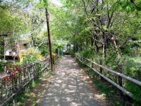 ふるさとの森への小道