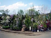 植木直売所