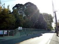 平岡坂のケヤキ並木