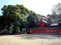 峯ヶ岡八幡神社の社叢