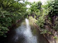 万葉親水公園に水をひいている代用水路西縁