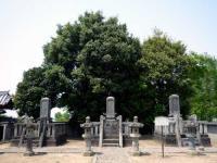 市指定文化財 旧忍藩主松平家の墓