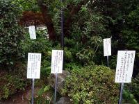 国分寺万葉植物園